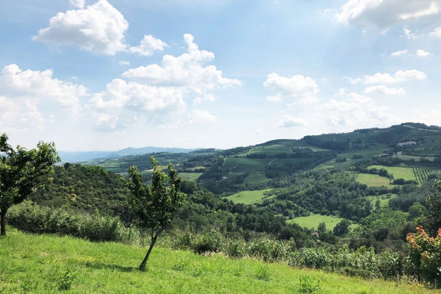 Lovely villa with vineyard views